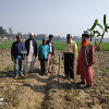 Bt brinjal fields with grafted bt brinjal seedlings in the fields of Bt brinjal growing brothers