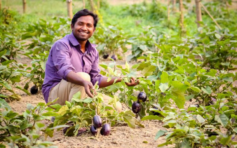 Hafizur Rahman is willing to grow Bt brinjal. According to Hafiz had maximum harvest growing Bt brinjal in his 10 years of brinjal cultivation.