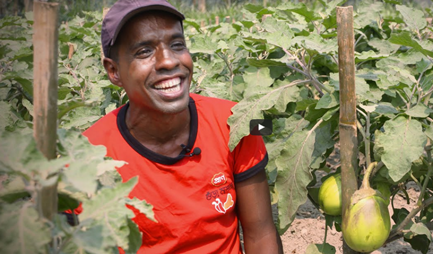 Bt brinjal farmers in Bangladesh - In their own words