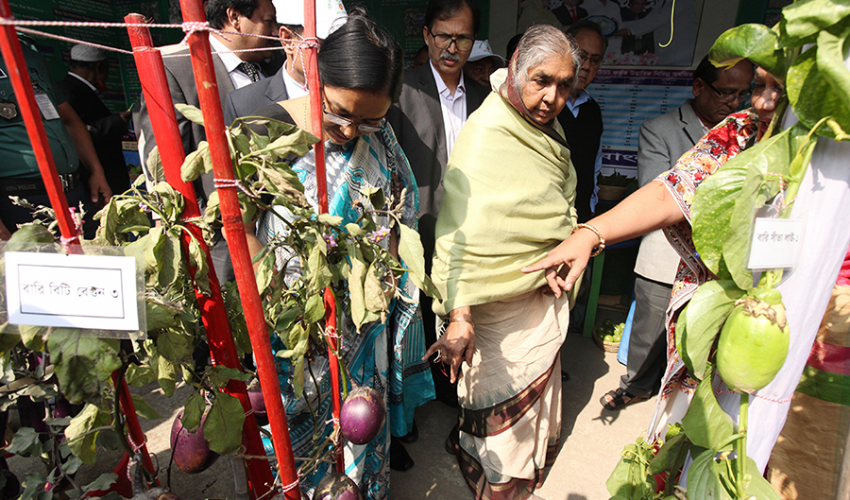 Honorable Agriculture Minister Begum Matia Chowdhury, MP, visiting BARI stall in the National Vegetables Fair 2016 and looking at the Bt brinjal along with other officials