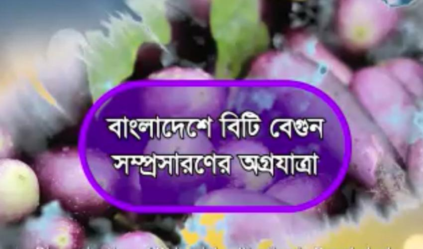 Dissemination of Bt brinjal cultivation in Bangladesh